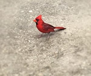 bird, nature, and red image