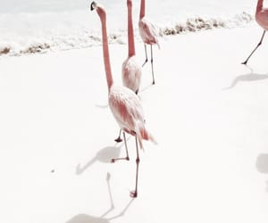 beach, flamingo, and pink image