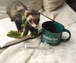 ferret, harry potter, and slytherin image