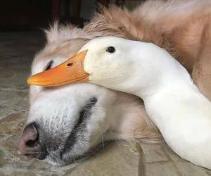 dog, friendship, and animal image
