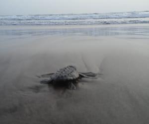 baby turtle, ocean, and veracruz image