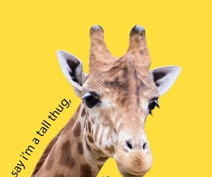 caroline, giraffe, and lyric image