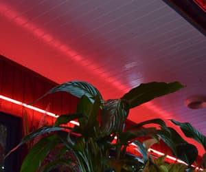 red, neon, and plants image