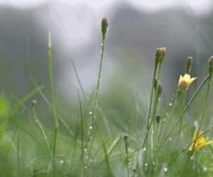 gif, flowers, and rain image