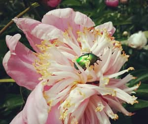 capture, insect, and pink image