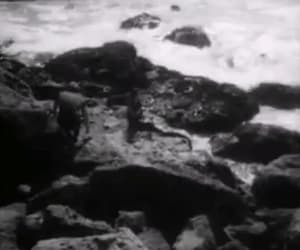 Dennis Hopper, gif, and night tide image