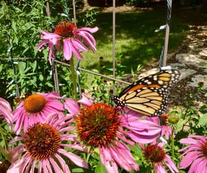 pretty, summer, and butterfly image