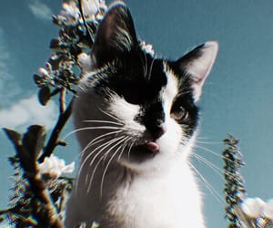 cat, aesthetic, and animal image
