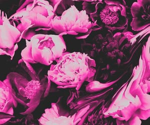 background, black, and floral image
