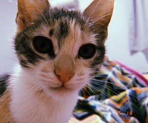 cat, dark eyes, and kitten image