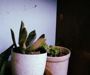 boho, filter, and house image