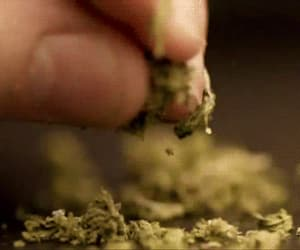 weed, gif, and green image