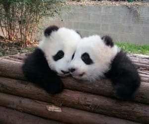 hug, panda, and animals image