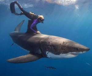 shark and ocean image