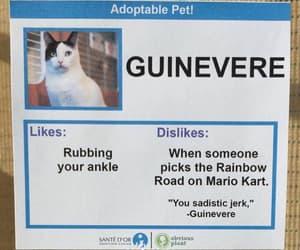 adoption, meme, and cat image