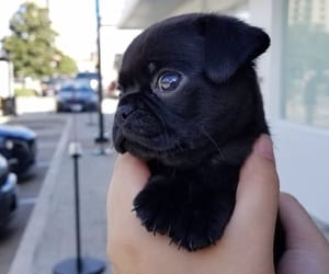 adorable, doggy, and pet image
