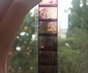 aesthetic, filme, and soft image