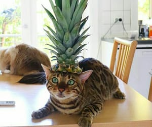 animal, cat, and disguised image