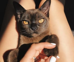 cat, yellow eyes, and cute image