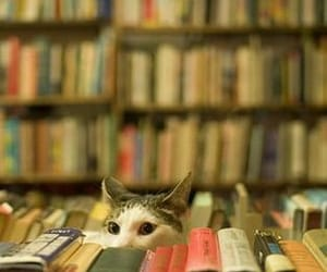 animal, books, and cat image