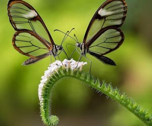 Animales, belleza, and mariposas image