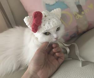 cat, kitty, and neko image
