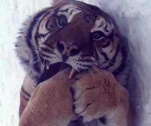 animals, kitten, and beautiful image