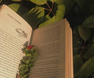 books, plants, and golden hour image