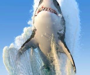 shark, animal, and ocean image