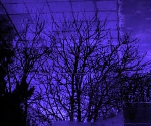 branches, trees, and dark purple image