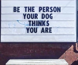 quotes, dog, and tumblr image