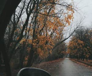 aesthetic, autumn, and foggy image