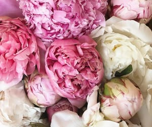bouquet, chic, and pink image