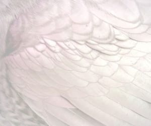 purple, wings, and bird image
