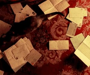 amelie poulain, cat, and gif image