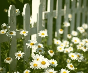 flowers, white, and fence image