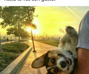 meme, perrito, and la chingada image