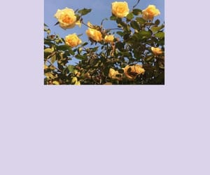 aesthetic, lilac, and roses image
