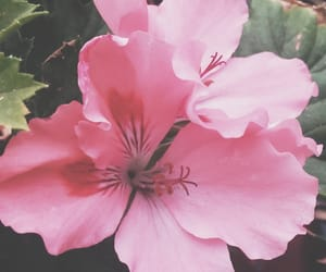 flores, pink, and verano image