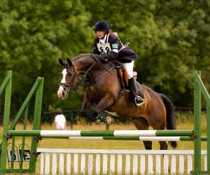 bay, pony, and eventing image