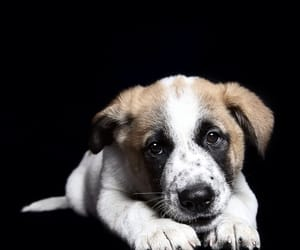 animals, puppy, and dogs image