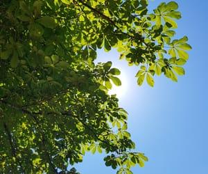 arbres, Vert, and Bleu image