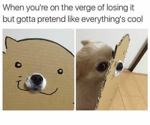 funny, meme, and dog image