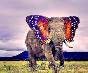 elephant, butterfly, and animals image
