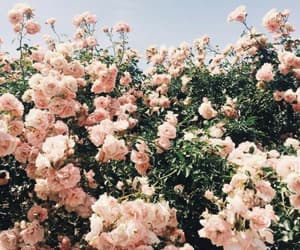 beautiful, pink, and day image