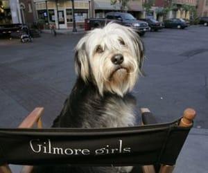 gilmore girls, dog, and paul anka image