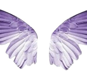 wings, feather, and fly image