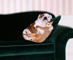 bulldog & kitty and having a cuddle image