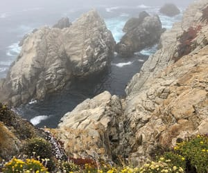 california, flowers, and foggy image