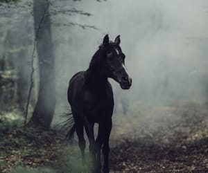 horse, iphone, and wallpaper image